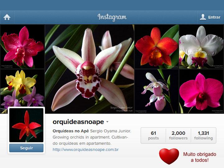 Orquídeas no Apê no Instagram