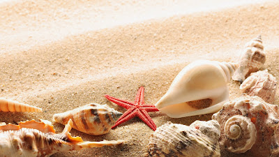nature-sand-starfish-seashells-wallpaper-1920x1080