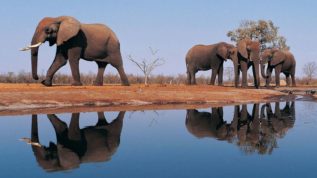 Elephant HD Wallpaper 8