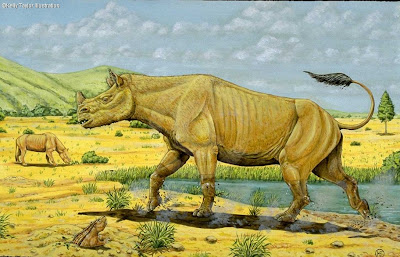 Rhinoceratidae extintos Menoceras