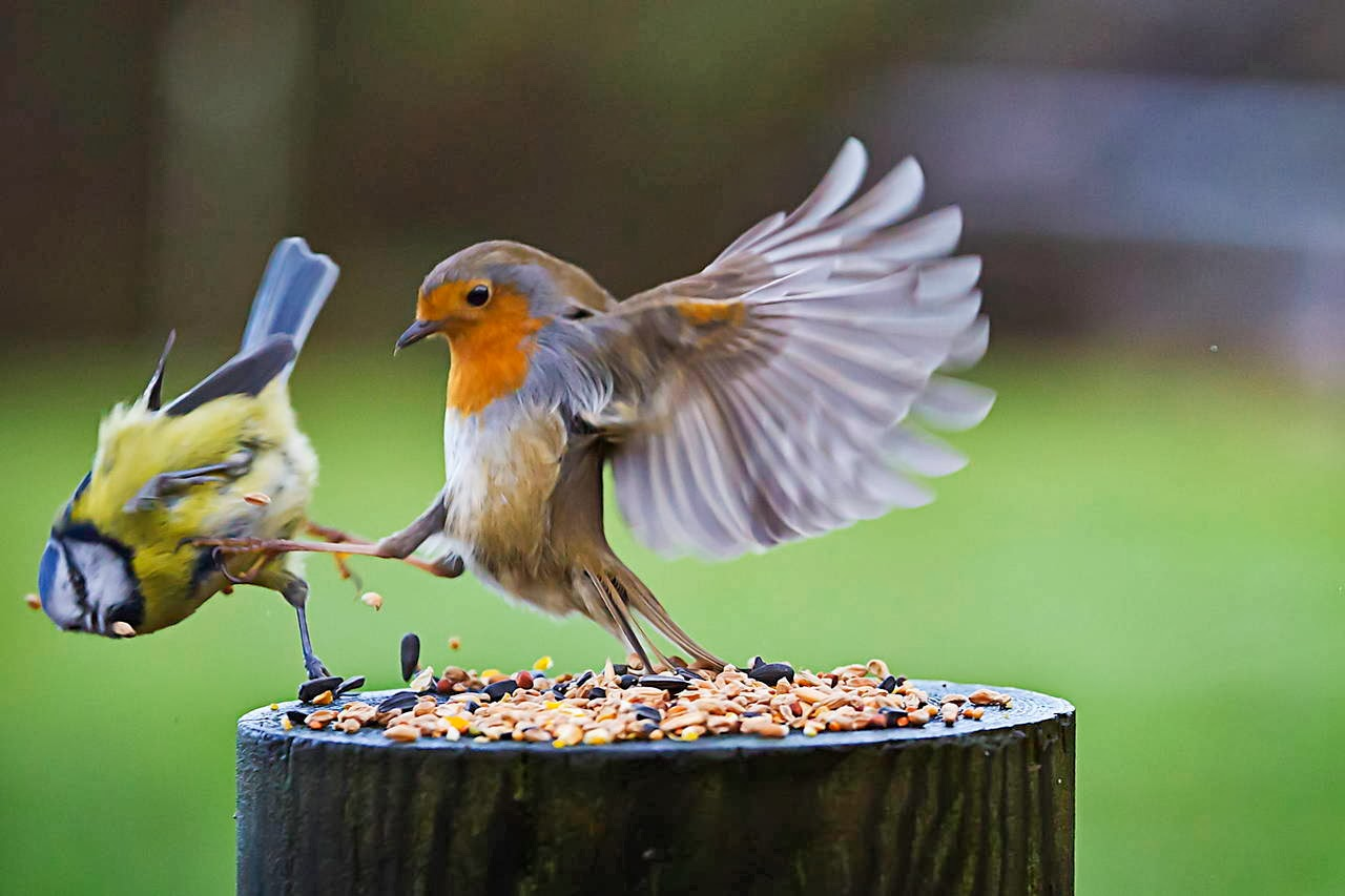 Funny animals of the week - 7 February 2014 (40 pics), bird kicks other bird from his food