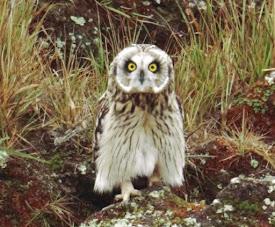 The Owl of September