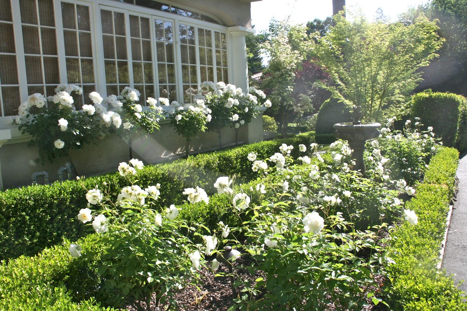 vignette design everything 39 s coming up roses. Black Bedroom Furniture Sets. Home Design Ideas