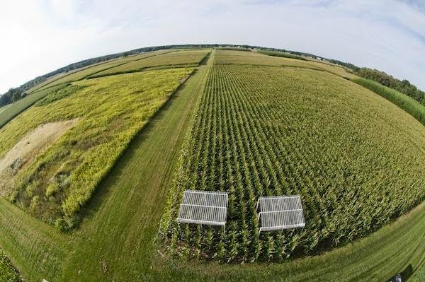 Scientists at the KBS LTER site research agriculture and climate change. (Credit: Kurt Stepnitz) Click to enlarge.