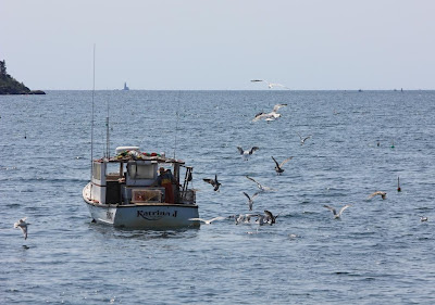 lobster boat with herring gulls