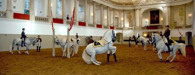 chevaux au dressage