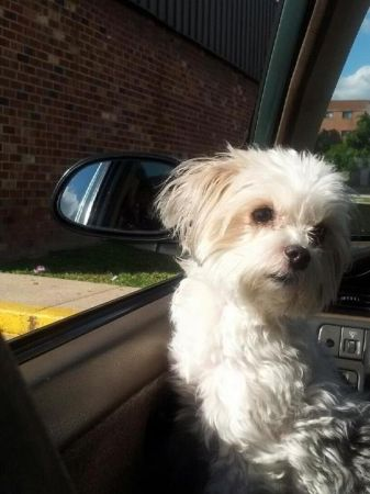 Missing Small Dog Alert: Missing...Baltimore, MD