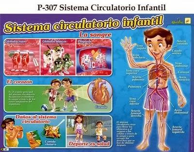 MIS COSAS DE MAESTRA La nutricin III APARATO CIRCULATORIO Y
