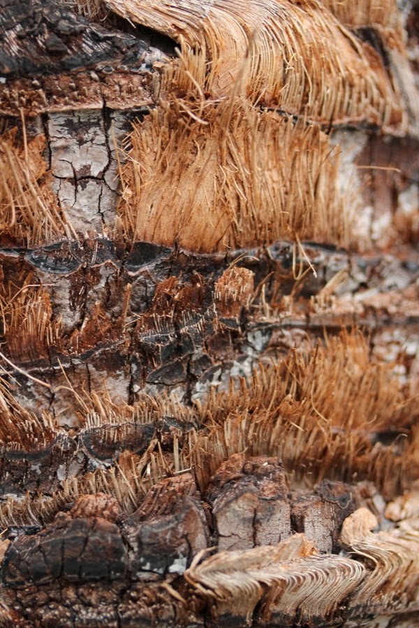 Palm Bark ~ Photo by ChatterBlossom #palm #tree #bark #photography