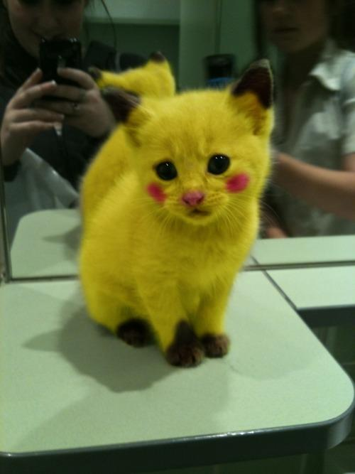Trash of the Internet Pictures Pikachu+IRL
