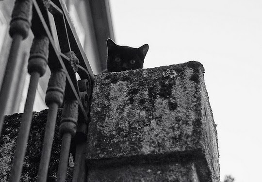 black and white picture of a black cat