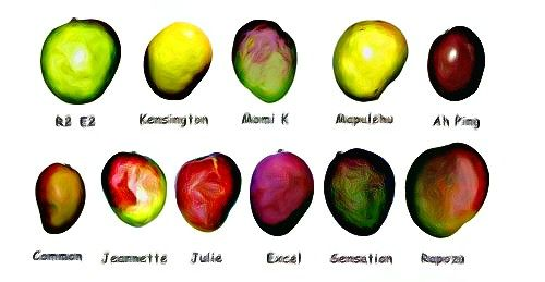 mango sorter