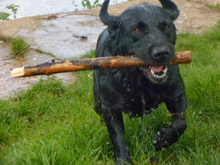 Fondo Perro feliz!