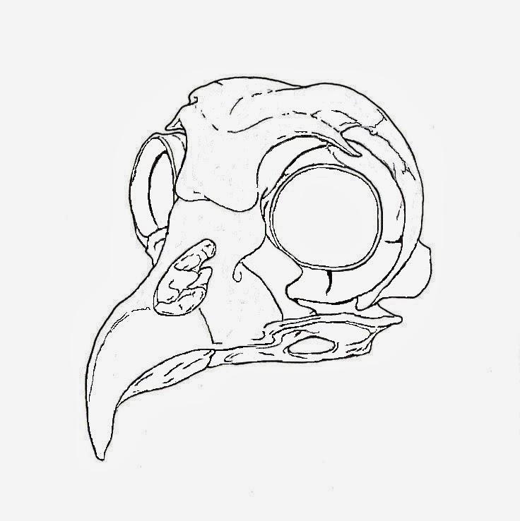 Animal skull bird tattoo stencil