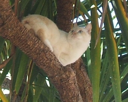 Can You Plant Cat Palm In Shade