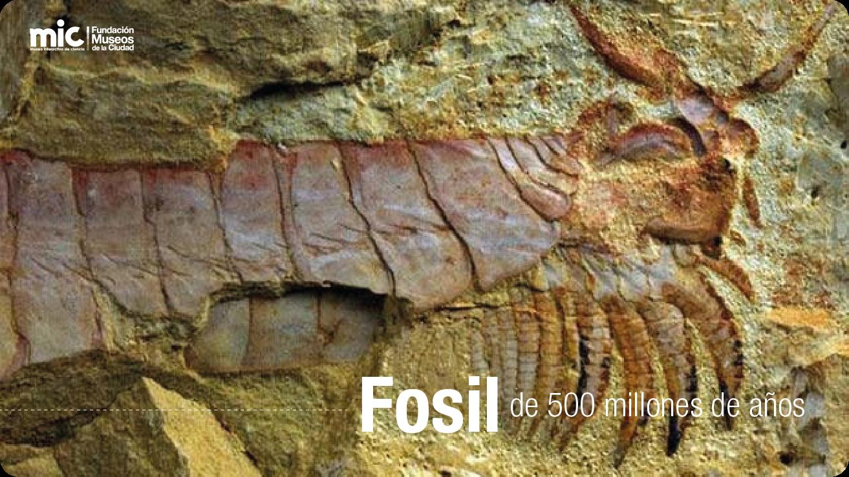 como clasificar a un fosil: