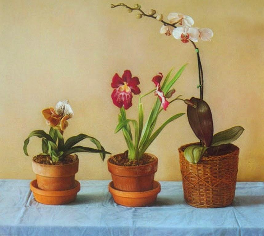 dibujos-con-flores-pintados-en-oleos