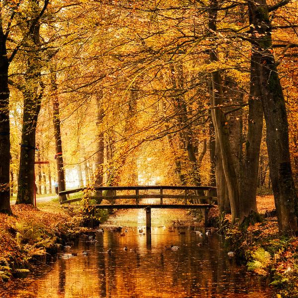 Autumn Amber7