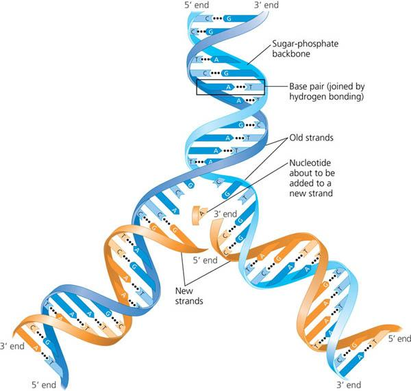Dna Double Helix Labeled Dna double helix model labeled images