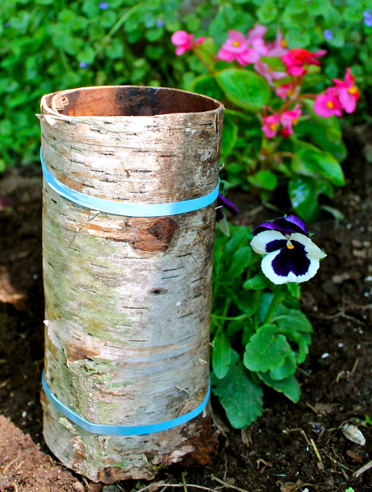 Twig and toadstool creating a birch bark vase creating a birch bark vase reviewsmspy