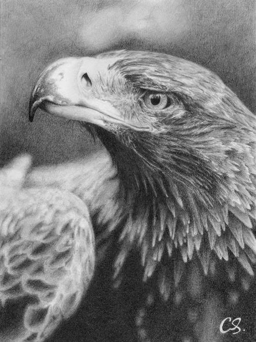 ola sou aguia