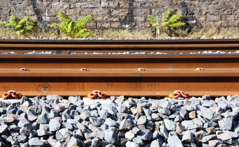 Trois fougères le long d'une voie ferrée.