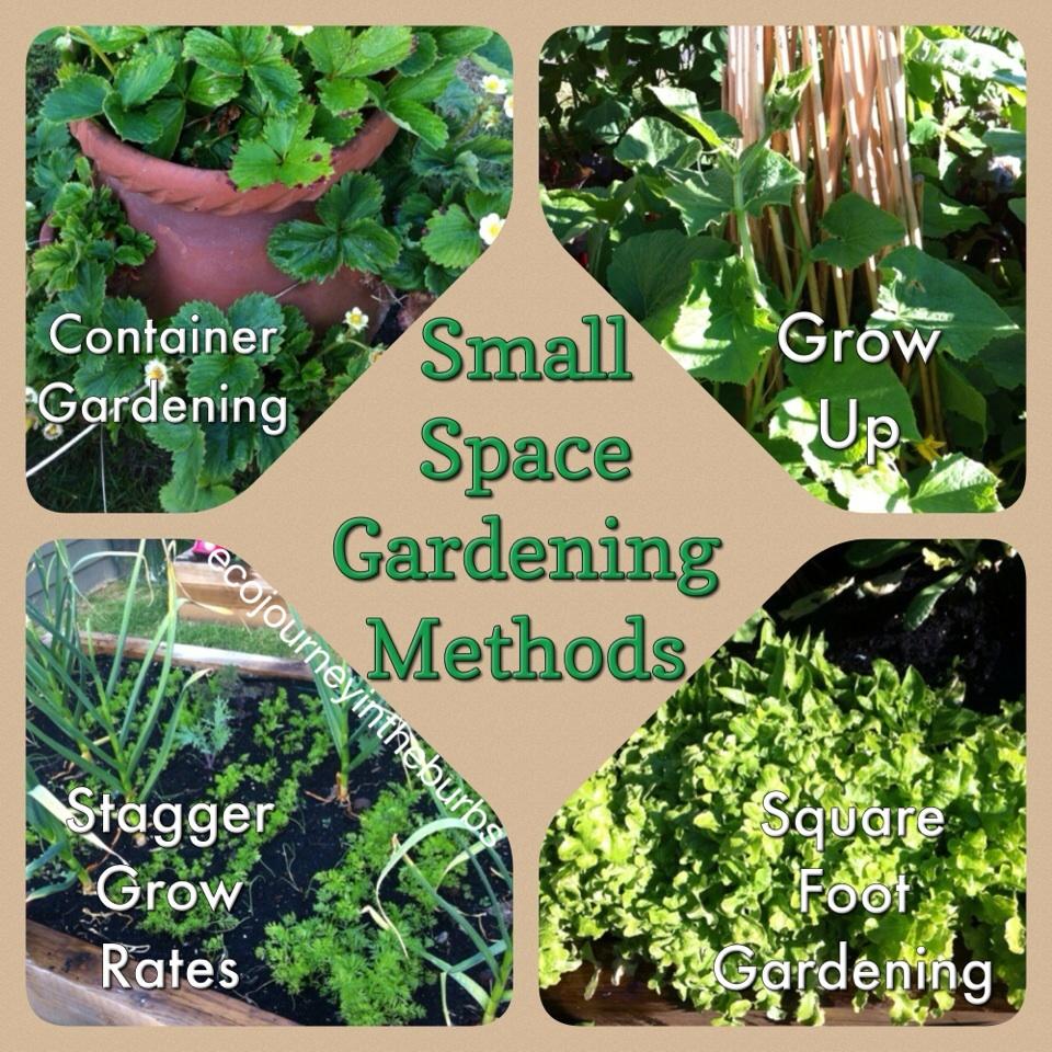 Eco Journey In The Burbs Diy Celery: Eco Journey In The Burbs: Small Space Gardening Methods