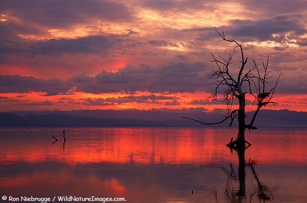 Salton Sea Sunset Photo by Ron Niebrugge