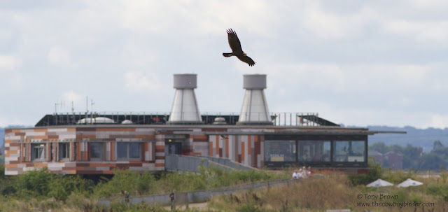 Rainham Marsh, Visitors Centre, RSPB