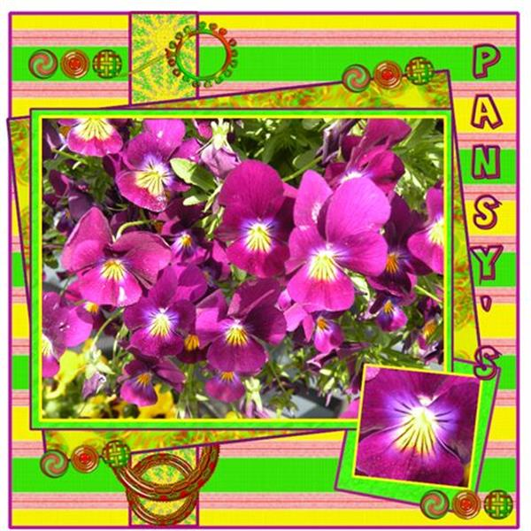 Pansy,s