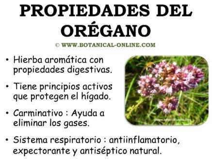 Plantas medicinales 2016 oregano for Manzanilla planta medicinal para que sirve