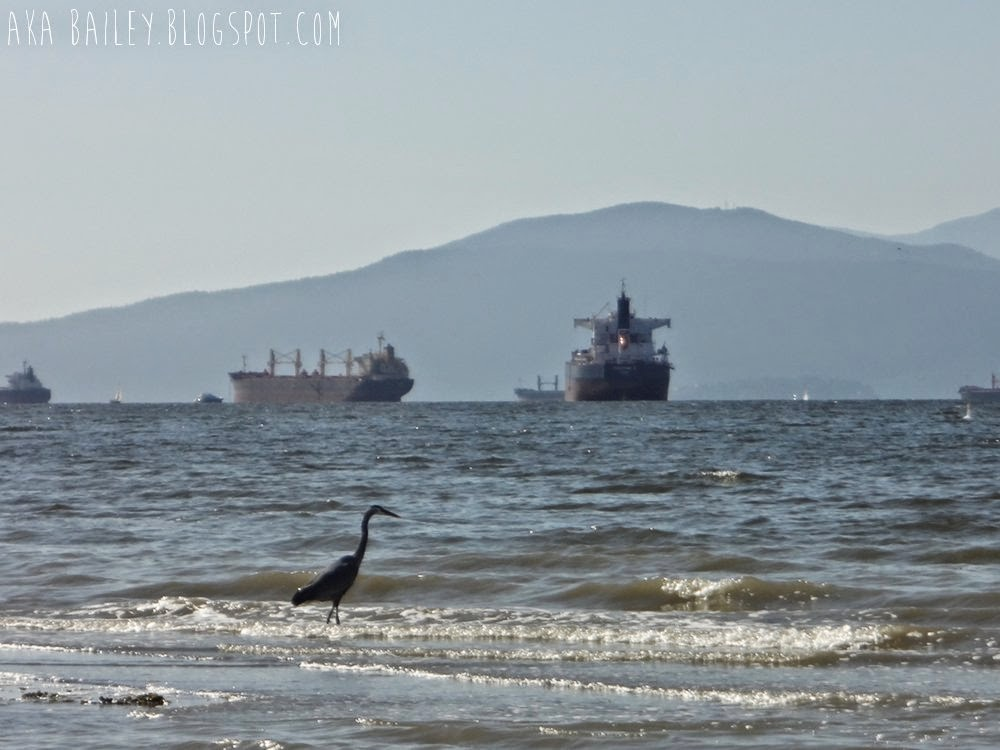 Heron and tankers in English Bay, Vancouver