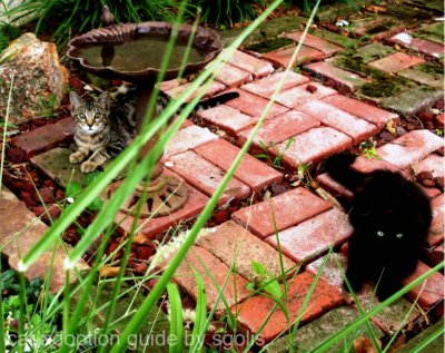 Best Way To Keep Cats Away From Gardens