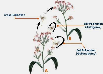 Self Pollination Biology Diagram Auto Electrical Wiring Diagram