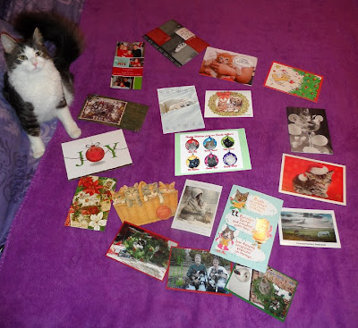 Anakin Cat With Two Legs, Christmas cards