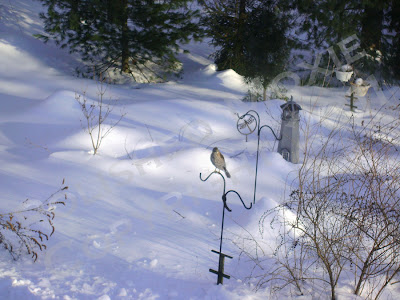 Picture of hawk on a plant hanger in the snowy garden