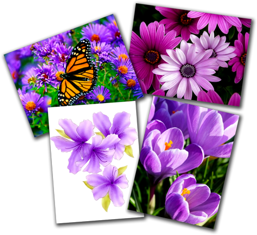 Purple Flowers Postcards