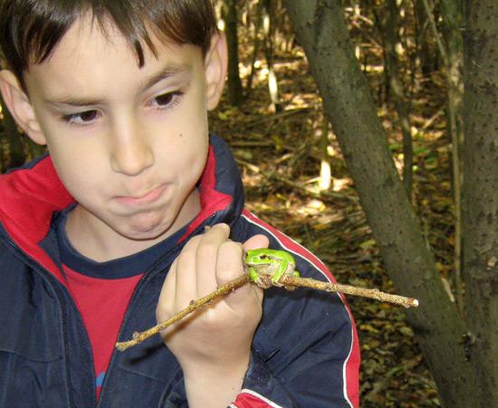 frog, в лесу