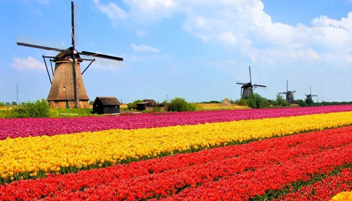 turism olanda moara de vant lalele
