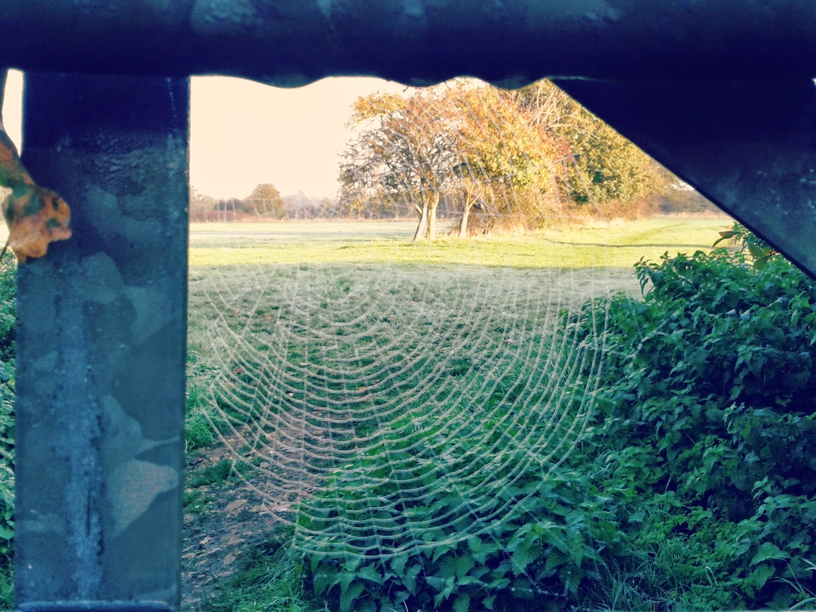 Project 365 day 308 - Autumn cobwebs // 76sunflowers