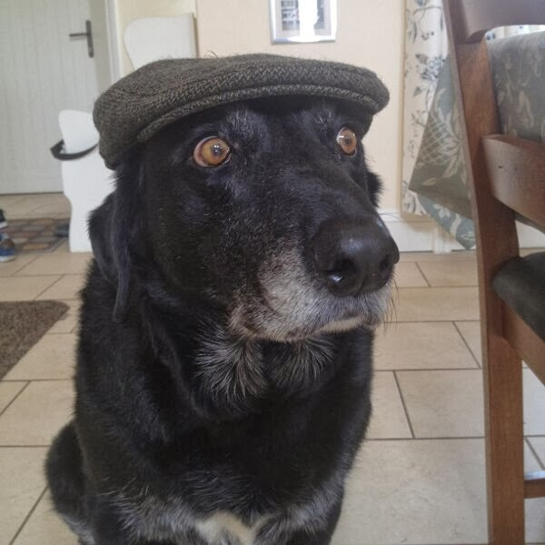 Cute dogs - part 11 (50 pics), dog wearing fedora hat