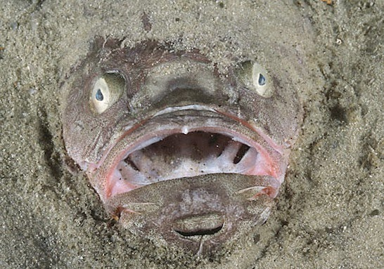 Những loài cá xấu xí