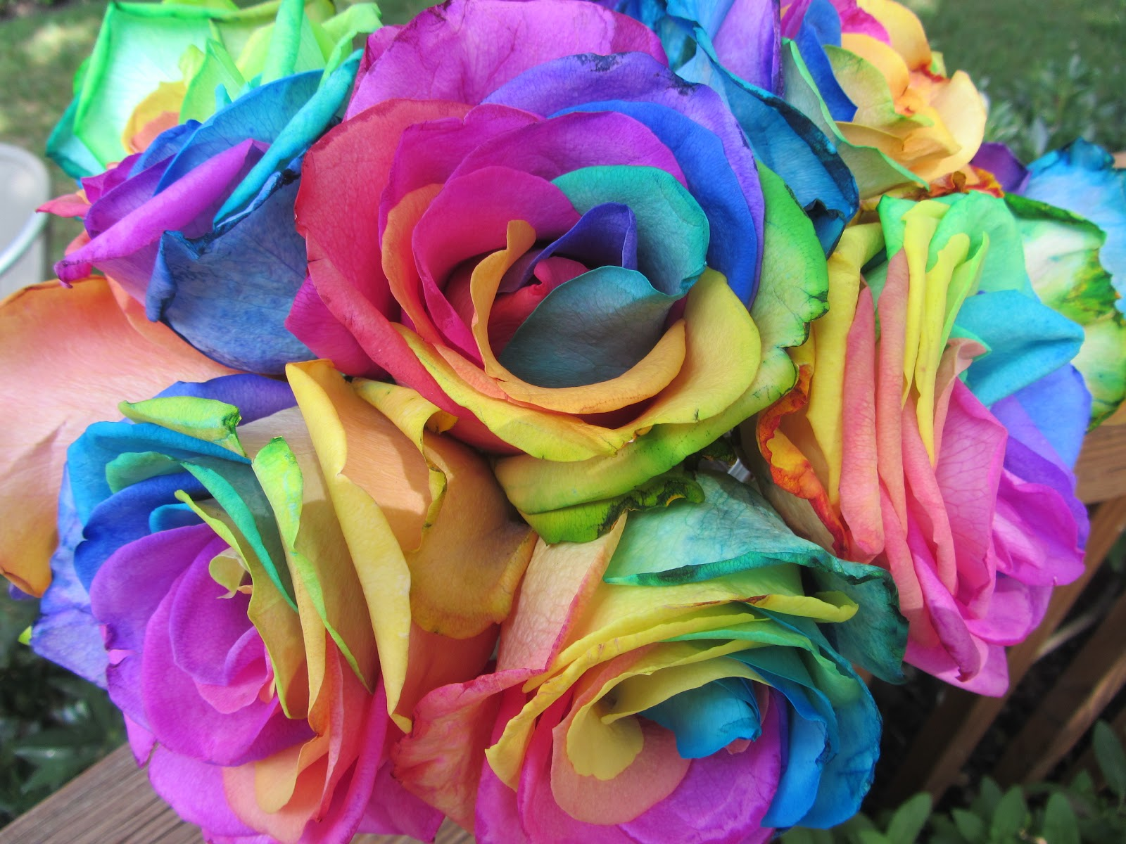 Carries Design Musings The Rainbow Rose