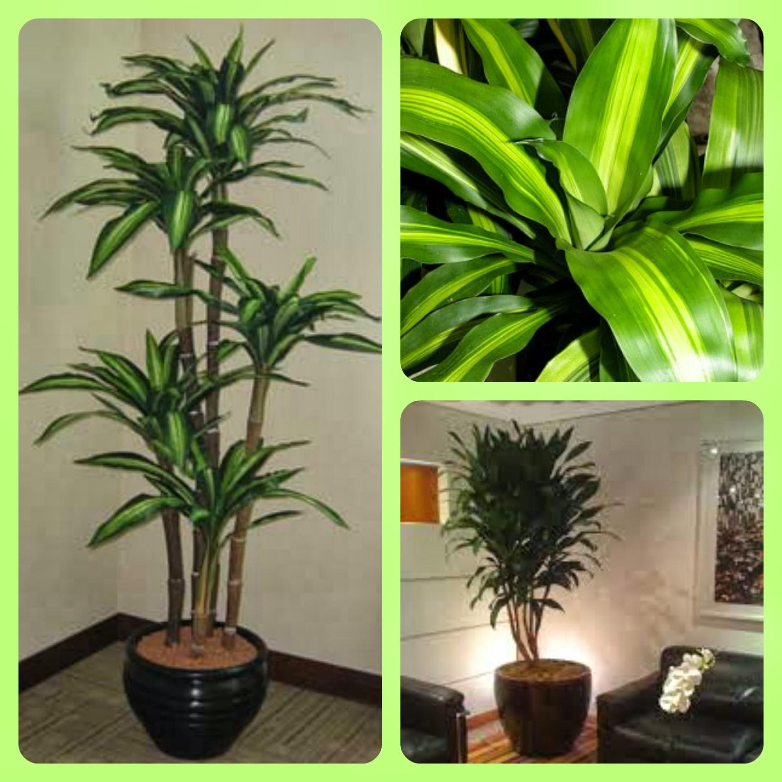 10 plantas para dentro de casa arte de fazer decora o