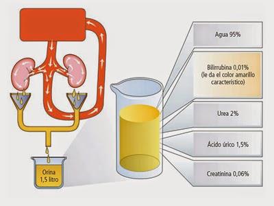composicion quimica de la sangre humana pdf