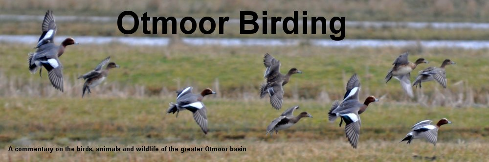 Otmoor Birding