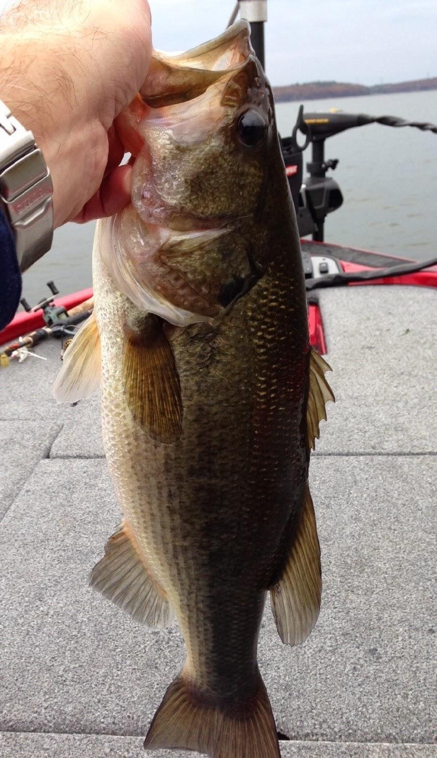 Smallie fishing october 2013 for Lake wallenpaupack fishing report