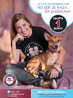 CAMPAA ADOPTA- NO COMPRES!