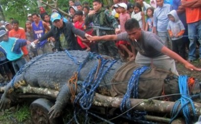 "Lolong, ""The Largest Crocodile ever caught in the Philippines"", on"