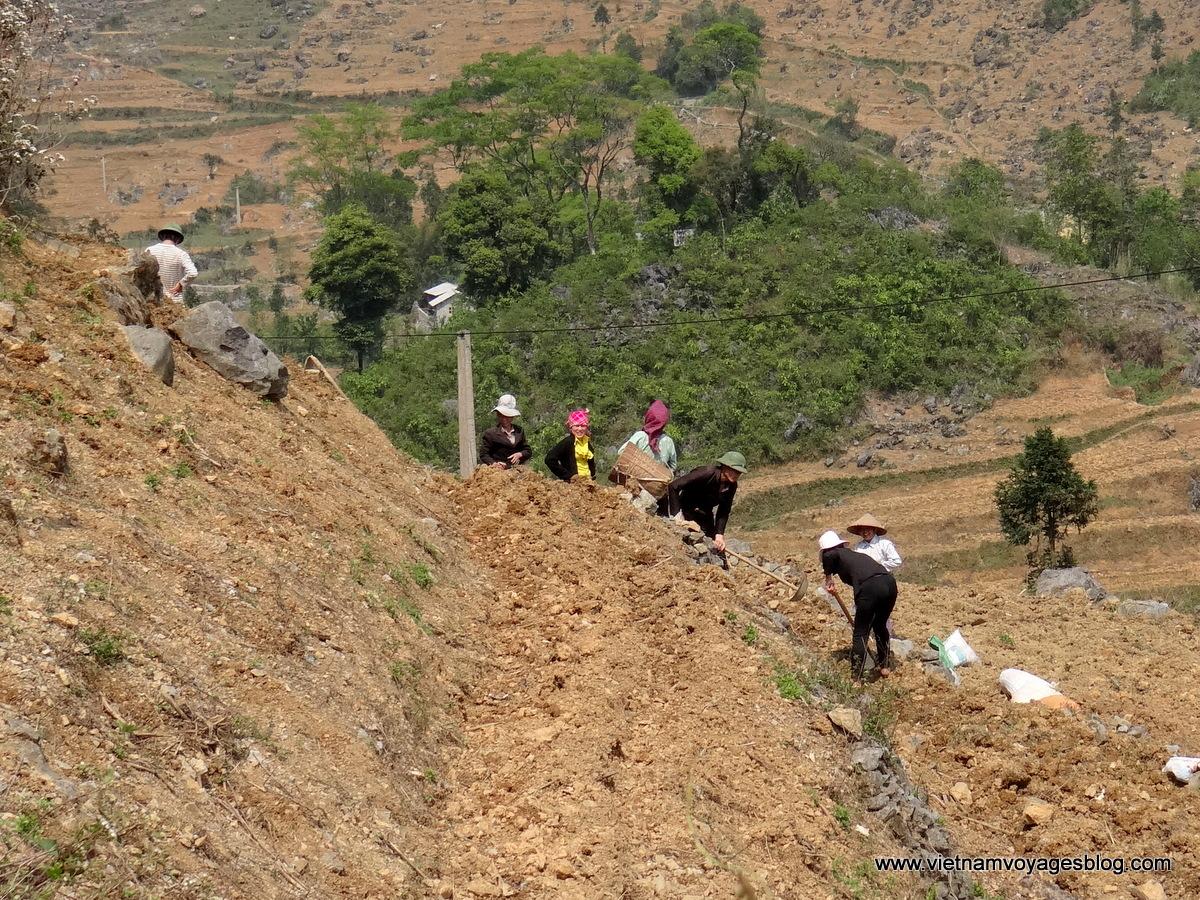 Kỳ công làm nương trên ruộng đá ở Hà Giang